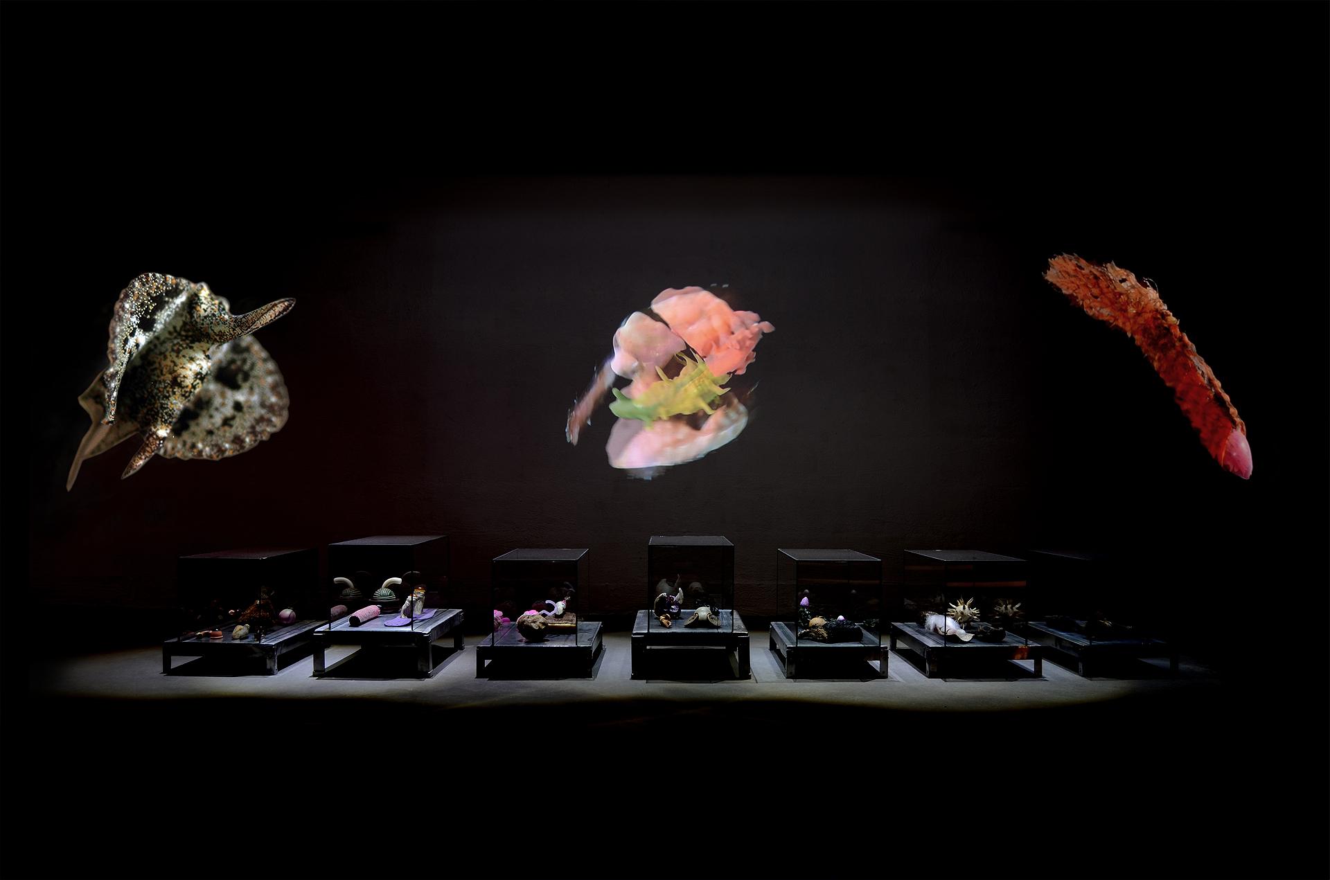 Ausstellungsansicht der Installation Transnature von Stefan Zoellner im Saarländischen Künstlerhaus, 7 Vitrinen und Video