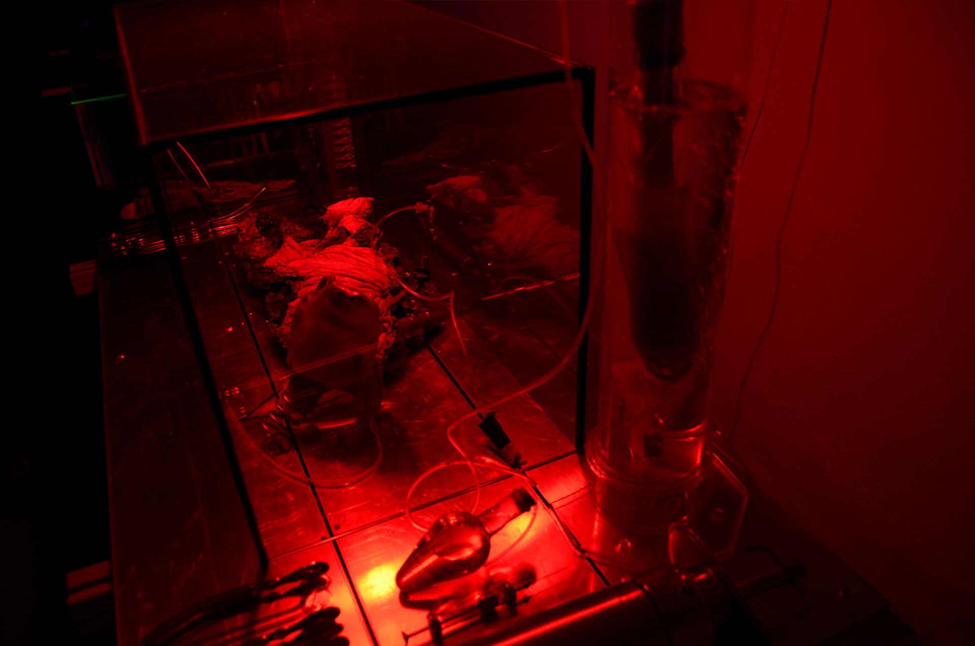 Ausstellungsansicht der Installation Transnature von Stefan Zoellner im Saarländischen Künstlerhaus | Roter Labortisch